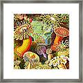 Actinia Sea Creatures Framed Print