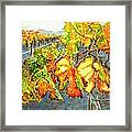 After The Harvest Framed Print