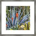 Agave And Cactus Framed Print