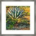 Agave In Secret Mountain Wilderness West Of Sedona Framed Print