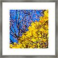 Alchemy Of Nature - Golden Streams Framed Print