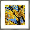 Alchemy Of Nature - Refining The Sungold Framed Print