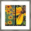 All About Black-eyed Susans Framed Print