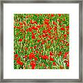 All Red Flower Beautiful Framed Print
