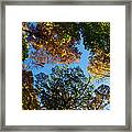 All The Trees Of The Forest Framed Print