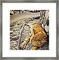 Alley Cat Siesta In Grunge Framed Print by Meirion Matthias