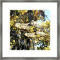 Alligator Bait Framed Print