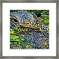 Alligator Mother's Day Framed Print