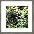 Alligatorbabys Waiting For Mommy Framed Print