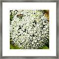 Allium Flower And Lightning Bug Framed Print