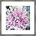Allium Series - After The Rain Framed Print by Moon Stumpp