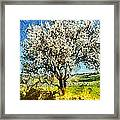 Almond Tree Framed Print