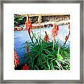 Aloe In Bloom Framed Print