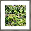 Alone In Grizzly Country Framed Print