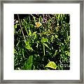 Alpine Fresh  Framed Print by Tim Rice