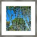 Alternate Reality - Reflected View Of The Forest From A Pond In Garland Ranch Park In Carmel Valley. Framed Print