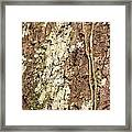 Amazon Ant Framed Print