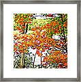 Amber Leaves  Framed Print by Dianne  Lacourciere