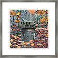 American Beech Framed Print