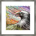 American Eagle Framed Print by Bedros Awak