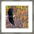 American Eagle In Autumn Framed Print