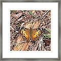 American Lady In Big Thicket Framed Print