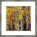 Among The Aspen Trees In Fall Framed Print