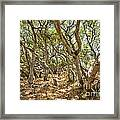 Among The Trees - The Mysterious Trees Of The Los Osos Oak Reserve Framed Print