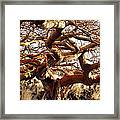 Ancient Wiliwili Tree Framed Print
