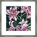 And They Called Her Lily Framed Print