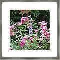 Angel In The Roses Framed Print