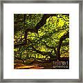 Angel Oak Limbs Crop 40 Framed Print
