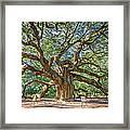 Angel Oak Tree In Charleston Sc Framed Print