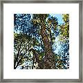 Angeles Sun -beautiful Tree With Sunburst In Angeles National Forest In The San Gabriel Mountails Framed Print
