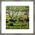 Angus Cows Under The Cool Shade By Prankearts Framed Print
