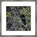 Anhinga In Brush Framed Print