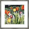 Ann's Tulips Framed Print