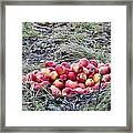 #apples Framed Print
