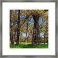 Appleton Farm Framed Print