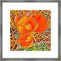 Apricot Globemallow In Vermilion Cliffs National Monument-arizona Framed Print