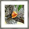 Apricot Leaf And Lichen Framed Print