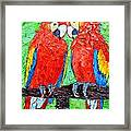 Ara Love A Moment Of Tenderness Between Two Scarlet Macaw Parrots Framed Print
