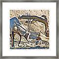 Arabian Oryx In Living Desert In Palm Desert-california Framed Print