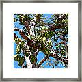 Panama Tree With Flowers Framed Print