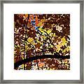 Arboretum Fall Framed Print