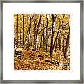 Arboretum Trail Framed Print