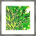 Arbres Verts Framed Print