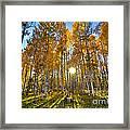 Arizona Gold Framed Print
