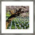 Arlington National Cemetary Framed Print