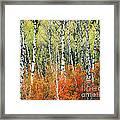 Aspen And Maple Trees In Autumn Framed Print